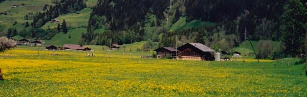 Lenk, 1999