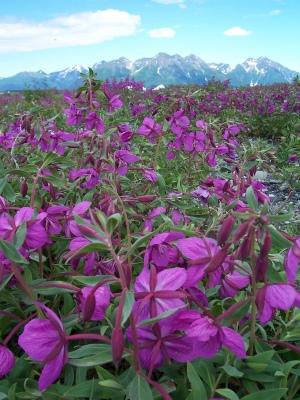 Southeast Alaska, USFS photo, CC 2.0